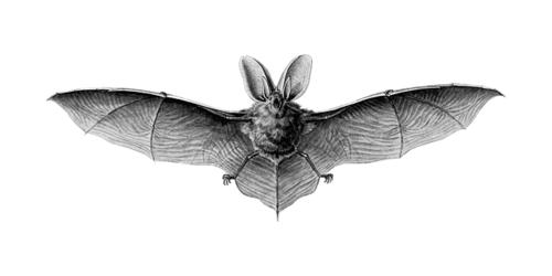 Vamos descobrir Portugal e os Morcegos da Biblioteca de Mafra