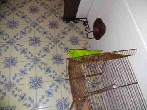 O Pássaro a olhar para nós na entrada