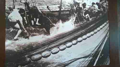 Pesca do atum